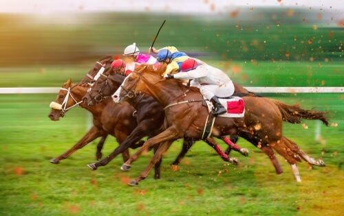 Canada horse racing betting remote viewing sports betting rapidshare